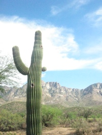 In the Land of Cactus