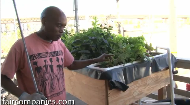 Farming in the City: Kijani Grows
