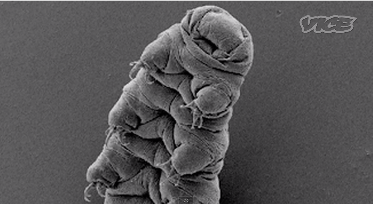 Tardigrades.. from space?