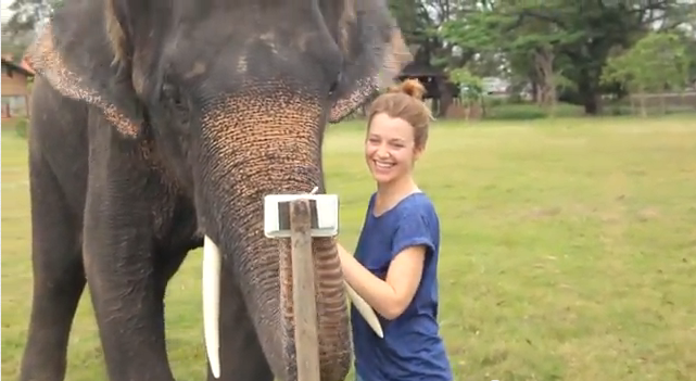 Elephant uses tablet